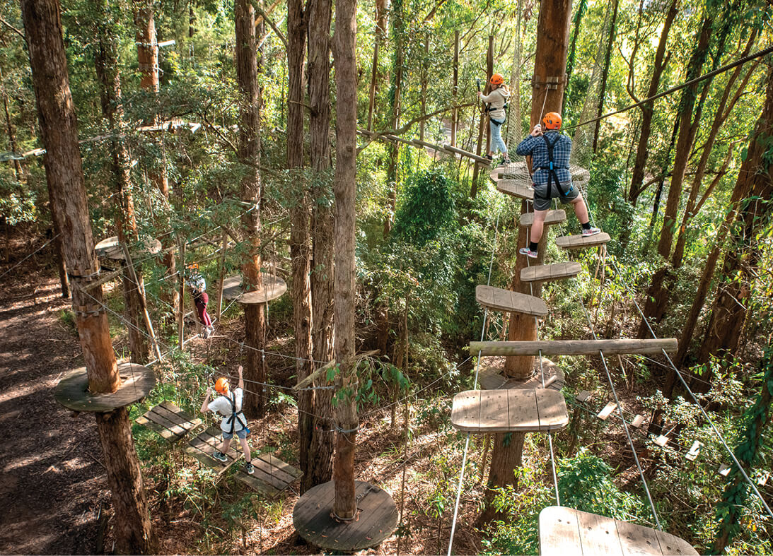 Treetops Adventure Central Coast17